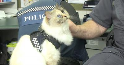 tia-police-cat.jpg