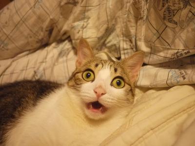 shocked-cat.jpg