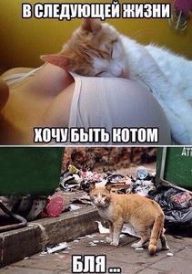 cat_in_next_life.jpg